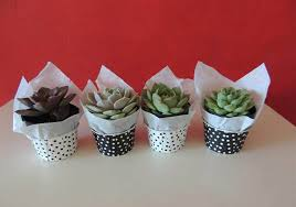 plant wedding favors succulent wedding bouquets centerpieces more succulents