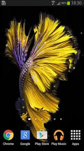 wallpaper bergerak sony xperia betta fish 6s live wallpaper for android free download on mobomarket