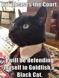 Lawyer Cat Meme - 8 best lawyer cat images on pinterest funny kitties funny animals