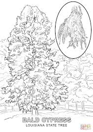 louisiana state tree coloring page free printable coloring pages