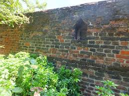 a recess in the walled garden where beehives were kept picture