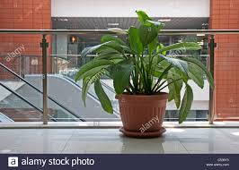 office plants flower pot in office building stock photo royalty