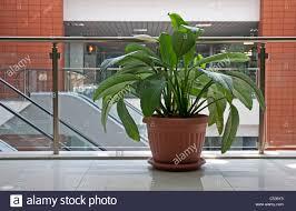 office pot plants full image for office pot plants 26 inspiring
