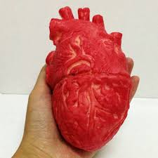 scary props large lifesize human heart parts scary bloody