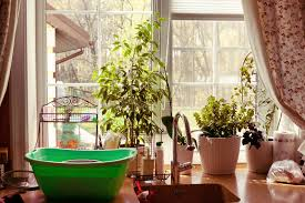 kitchen window garden kitchen window garden view plants stock image image of gourmet