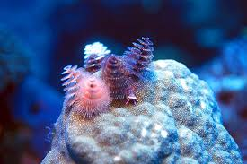 these 34 rare sea animals seem to come from another world u2026 amazing