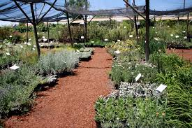 southeastern native plant nursery best new mexico plant nurseries good to grow
