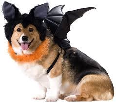 Bat Costume Halloween 158 Halloween Pets Images Pet