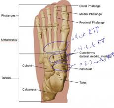 Top Foot Anatomy Seth Jones Fractures Foot Dr Parekh The Fantasy Doctors