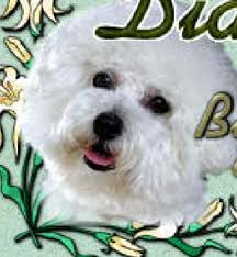 bichon frise and cats cyberpet the ultimate resource for dogs cats and pets