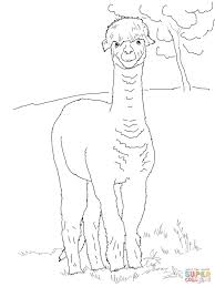funny alpaca coloring page free printable coloring pages