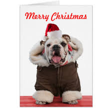 bulldog cards photocards invitations more