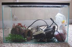 Aquarium Decorations Cheap Cheap Alternatives To An Aquarium Setup Pethelpful