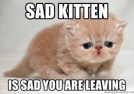 Sad Kitten Meme - sad kitten is sad you are leaving sad kittens meme generator