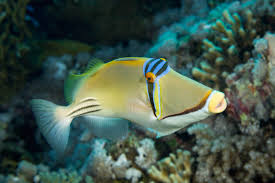 tropical fish life from warm seas