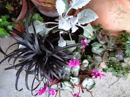 image result for winter garden combinations winter garden