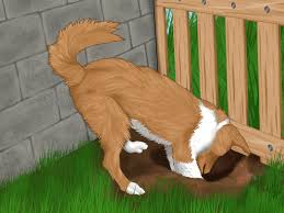 Backyard For Dogs by 3 Ways To Stop Your Dog From Running Out Of The Backyard Wikihow