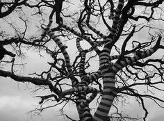 zebra s in the trees traditional cache in minnesota united