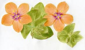color pencil sketches flowers drawing art u0026 skethes