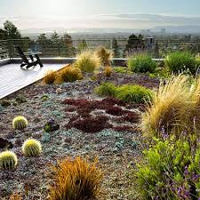 roof garden plants 12 great drought tolerant plants rooftop drought tolerant
