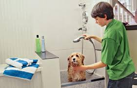 Bathtubs For Dogs How To Plan A Dog Cleaning Station This Old House