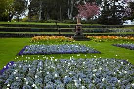 spring flowers in timaru botanic gardens timaru south canterbury