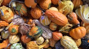 houston u0027s top 10 pumpkin patches abc13 com