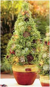 160 best succulents images on pinterest flowers gardening and