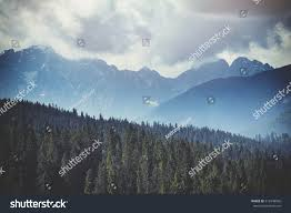 Forest Green by Forest Green Mountain Forest Landscape Misty Stock Photo 512948026