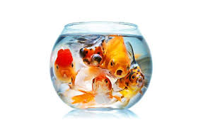 aquarium dgm aquarium shop ornamental fish goldfish platy