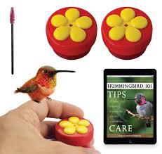 Jewel Box Window Hummingbird Feeder Aroma Trees Mini Handheld Hummingbird Feeder Kit Coupon World