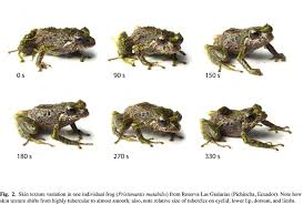 shifting frog discovered in ecuadorian andes