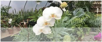 Nursery Plant Supplies by An Eastridge Garden U2013 Garden Nursery And Supplies Centreville Md