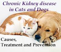 boxer dog kidney problems prevention and natural treatment of animals with chronic kidney