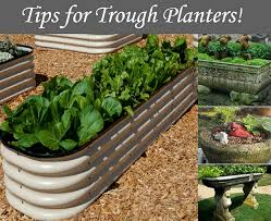 13 great tips for trough planters