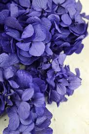 Purple Hydrangea Lavender Lilac Plum Eggplant Flowers U0026 Decorations By Color