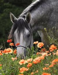 Spring Flower Pictures Best 25 Horse Flowers Ideas On Pinterest Horse White Horses