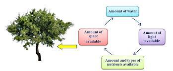 Adaptations Of Tropical Rainforest Plants - plants adaptations in different habitats