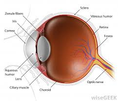 What Can Cause Blindness What Is Congenital Blindness With Pictures