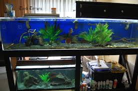 55 gallon aquarium light stacked 200 gallon and 55 gallon aquarium setup photos details