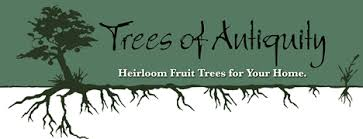 trees of antiquity heirloom fruit trees for your home
