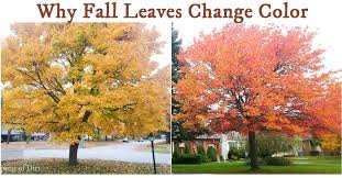 why tree leaves change color in fall empress of dirt