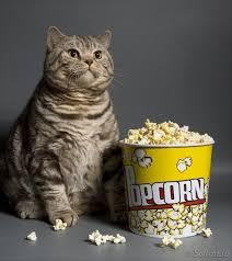 Fat Cat Heavy Breathing Meme - meme template search imgflip