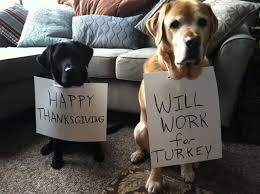 happy thanksgiving will work for turkey pictures photos and