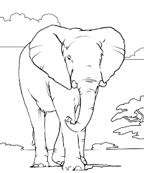 african elephant coloring african elephant free printable