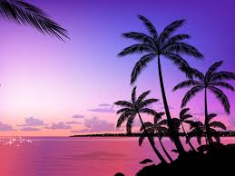pink palm tree background u2013 images free download
