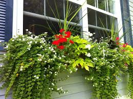 Flower Boxes That Thrive In by 213 Best Window Boxes Images On Pinterest Window Boxes