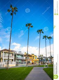 path palm trees and houses in newport beach stock photo image