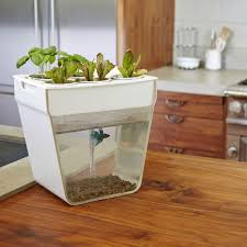 triyae com u003d backyard aquaponics kit various design inspiration