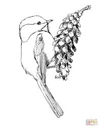 black capped chickadee in flight coloring page free printable